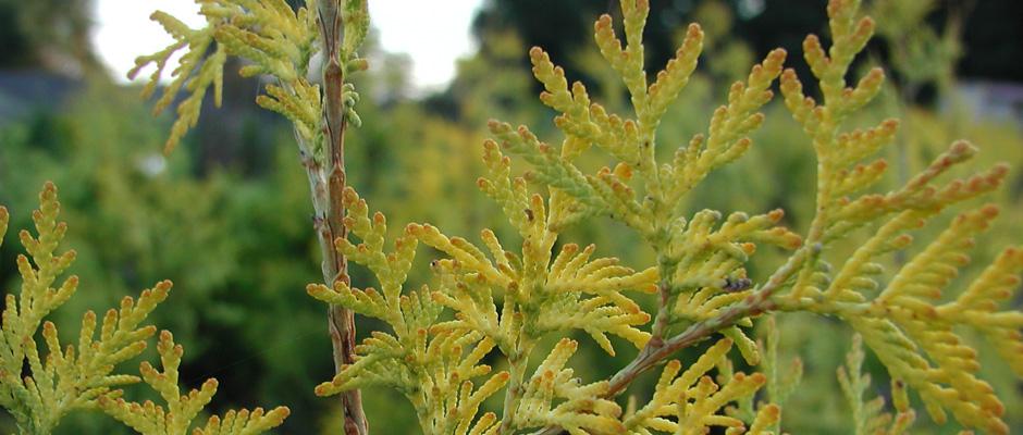Наши растения украсят Вашу жизнь!